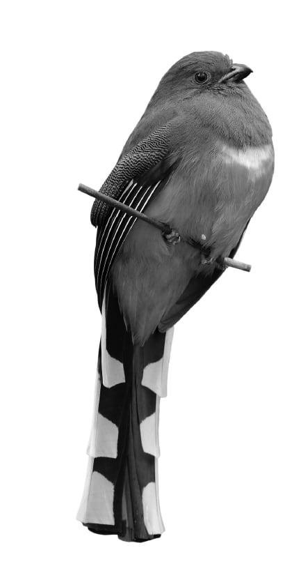 Villa Pineta Fusio Kunsthotel Bird